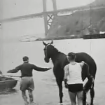 blackie swims the golden gate in 1938