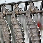 seahorse railing steinhart aquarium
